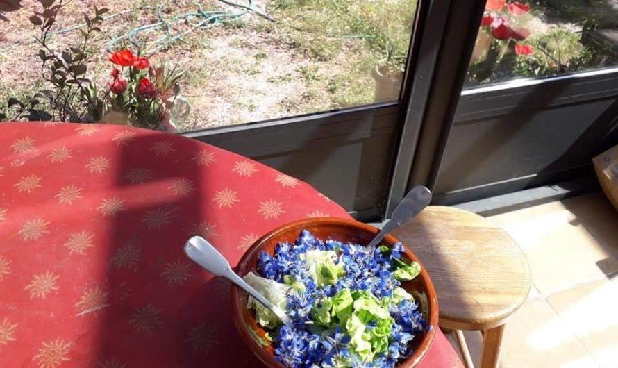 Aspargas feras / Omelette d'asperges sauvages et salade de jardin avec des fleurs de bourrache