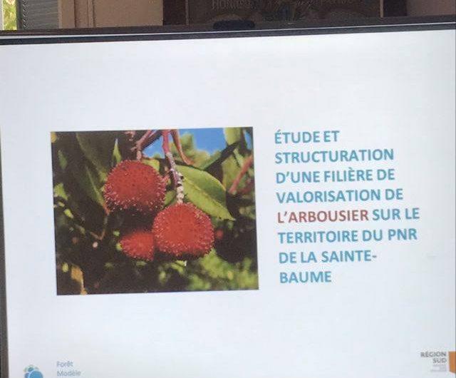 Forêt Modèle de France, la valorisation de l'arbousier dans nos massifs forestiers (3)